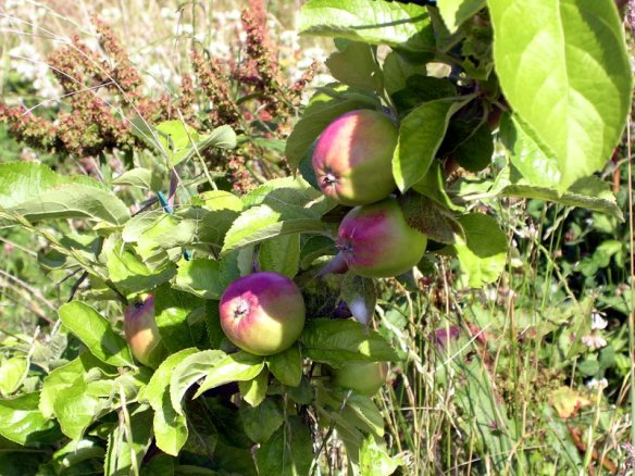 Some of my apples